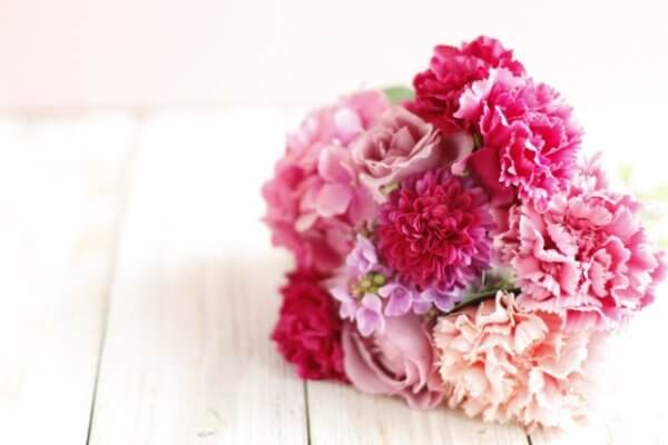 カーネーションの切り戻しの時期 切り戻してもう一度花が咲きます