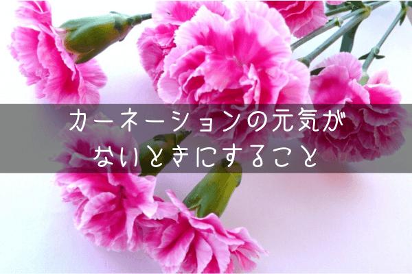 カーネーションの元気がないとき 花が咲かないときにすること