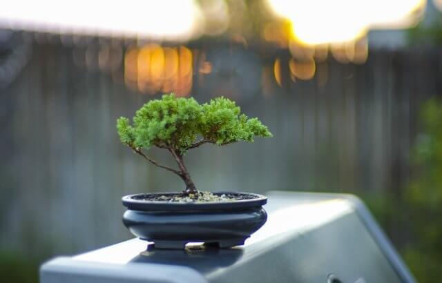 ミニ盆栽の寿命はどのくらい?