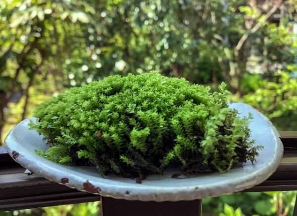ミニ盆栽の水やりは留守の間はどうすればいい?