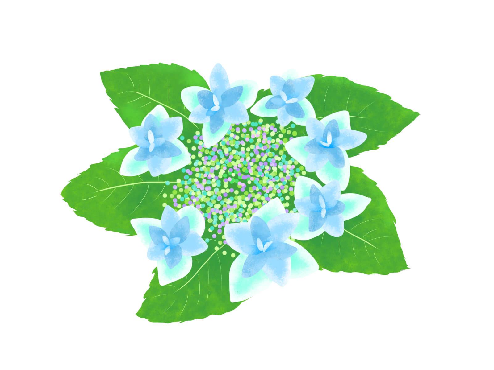 アジサイの鉢植えがしおれる原因と復活させる方法